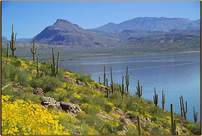 The arizona fishing guides roosevelt lake for Fishing lakes in arizona